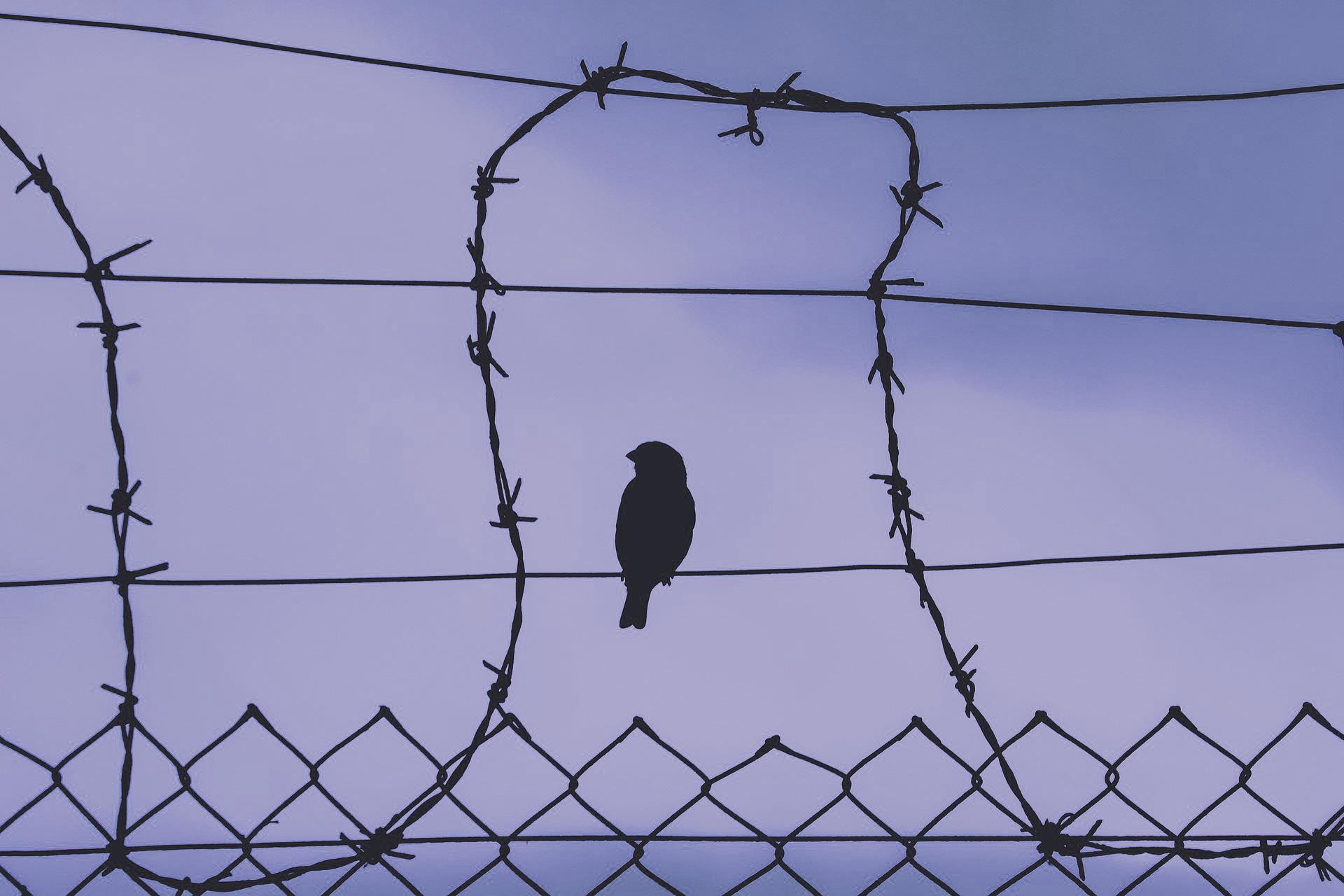 bird-on-a-wire-5243730_1920
